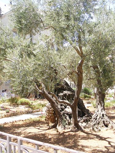 jerusalem-garden